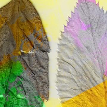 Leaves 7 print