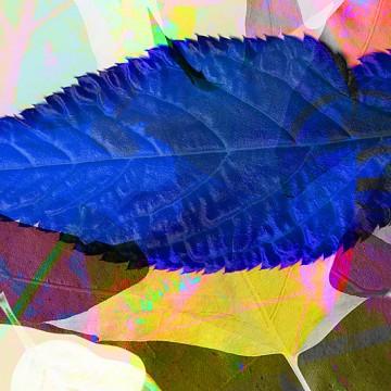 Leaves 6 print