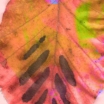 Leaves 3 print