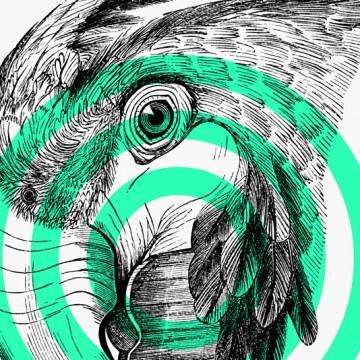 Parrot print