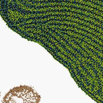 Alga print