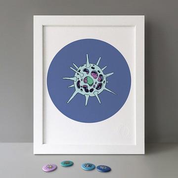 Radiolaria Blue print