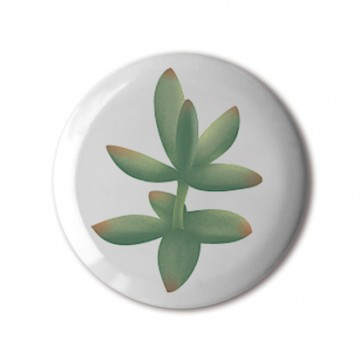 Gift Box: 4 button badges (Succulents)